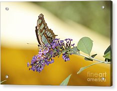 Butterfly Lavender Branch Acrylic Print by Andrea Hazel Ihlefeld