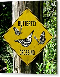 Butterfly Crossing Acrylic Print