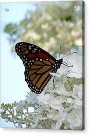 Butterfly Dreams II Acrylic Print by Terry Eve Tanner