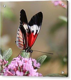 Butterfly Elegance Acrylic Print by Valia Bradshaw