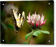 Acrylic Print featuring the photograph Butterfly by Gary Rose