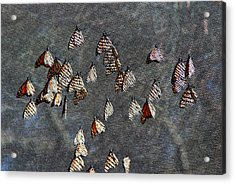Acrylic Print featuring the photograph Butterfly Gathering by Tam Ryan