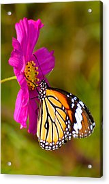 Butterfly II Acrylic Print by Fotosas Photography