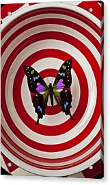 Butterfly In Circle Bowl Acrylic Print by Garry Gay