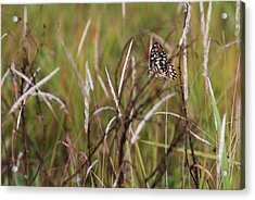 Acrylic Print featuring the photograph Butterfly In Flight by Fotosas Photography