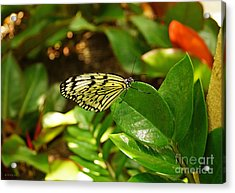 Butterfly In Yellow And Black Acrylic Print by J Jaiam