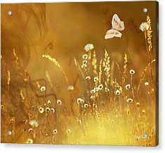 Butterfly Kiss Acrylic Print by Torie Tiffany