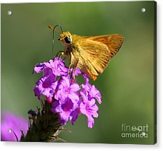 Butterfly Kisses Acrylic Print by Patrick Witz