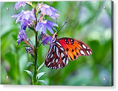 Butterfly Acrylic Print by Linda Pulvermacher