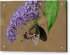 Butterfly Looking Up Acrylic Print by Daamonturne