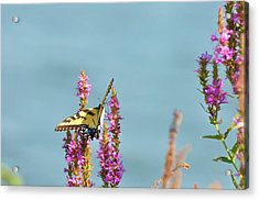 Butterfly Morning Acrylic Print by Bill Cannon