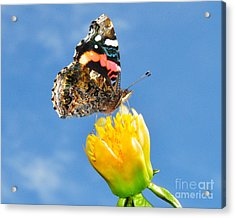 Acrylic Print featuring the photograph Butterfly N Flower by Jack Moskovita