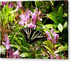 Butterfly On Flowers Acrylic Print by Mark Caldwell