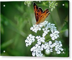 Butterfly On Lacy Wildflower Acrylic Print by Nava Thompson