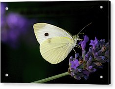 Butterfly On Lavender Flower Acrylic Print by Annfrau