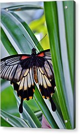 Acrylic Print featuring the photograph Butterfly On Leaf by Werner Lehmann