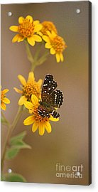 Acrylic Print featuring the digital art Butterfly On Marigold by John  Kolenberg