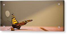 Butterfly Acrylic Print by Paul Robb