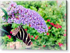 Butterfly Plant Acrylic Print by Debbie Sikes