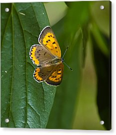 Butterfly Pose Acrylic Print by Sarah McKoy
