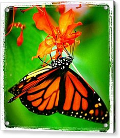 #butterfly #pretty #colorful Acrylic Print