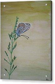 Butterfly Acrylic Print by Silvia Louro