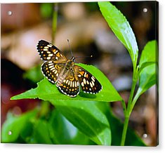 Acrylic Print featuring the photograph Butterfly by Susi Stroud