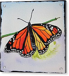 Acrylic Print featuring the painting Butterfly by Teresa Beyer