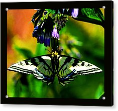 Acrylic Print featuring the photograph Butterfly Upside Down On Comfrey Flowers by Susanne Still