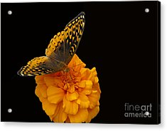 Acrylic Print featuring the photograph Butterfly Visitor by Cindy Manero