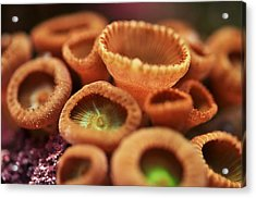 Acrylic Print featuring the photograph Button Polyp by Puzzles Shum