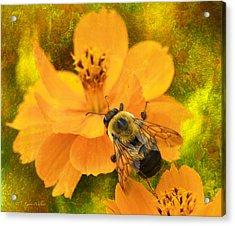 Buzzy The Honey Bee Acrylic Print by J Larry Walker