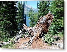By Jenny Lake Acrylic Print by Dany Lison