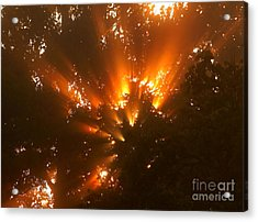 By The Dawns Early Light Acrylic Print by Marjorie Imbeau