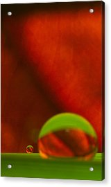 C Ribet Orbscape Le Petit Acrylic Print