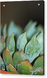 Cactus 2 Acrylic Print by Melissa Haley