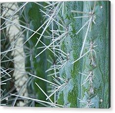 Cactus Close Acrylic Print by Dietrich Sauer