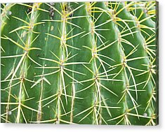 Cactus Close Trouble Acrylic Print by Dietrich Sauer