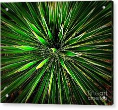 Cactus Explosion Acrylic Print