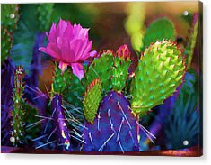 Cactus Flowers In Pink Acrylic Print