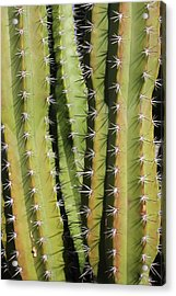Cactus Acrylic Print by Jodie Coston