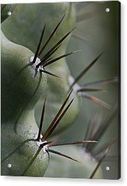 Cactus Macro Acrylic Print