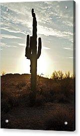 Cactus Sunset Acrylic Print