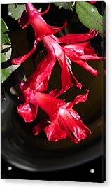 Cactus Twins Acrylic Print by Wanda Brandon