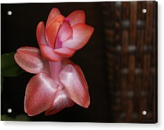 Cactus Wicker Acrylic Print
