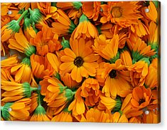 Acrylic Print featuring the photograph Calendula Flowers by Aleksandr Volkov