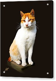 Calico Acrylic Print by Tom Schmidt