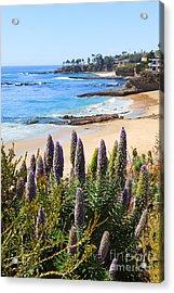 California Coast Flowers Photo Acrylic Print by Paul Velgos