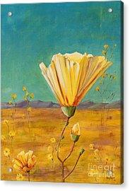 California Desert Closeup Acrylic Print