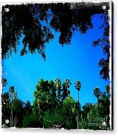 California Dreaming Acrylic Print by Nina Prommer